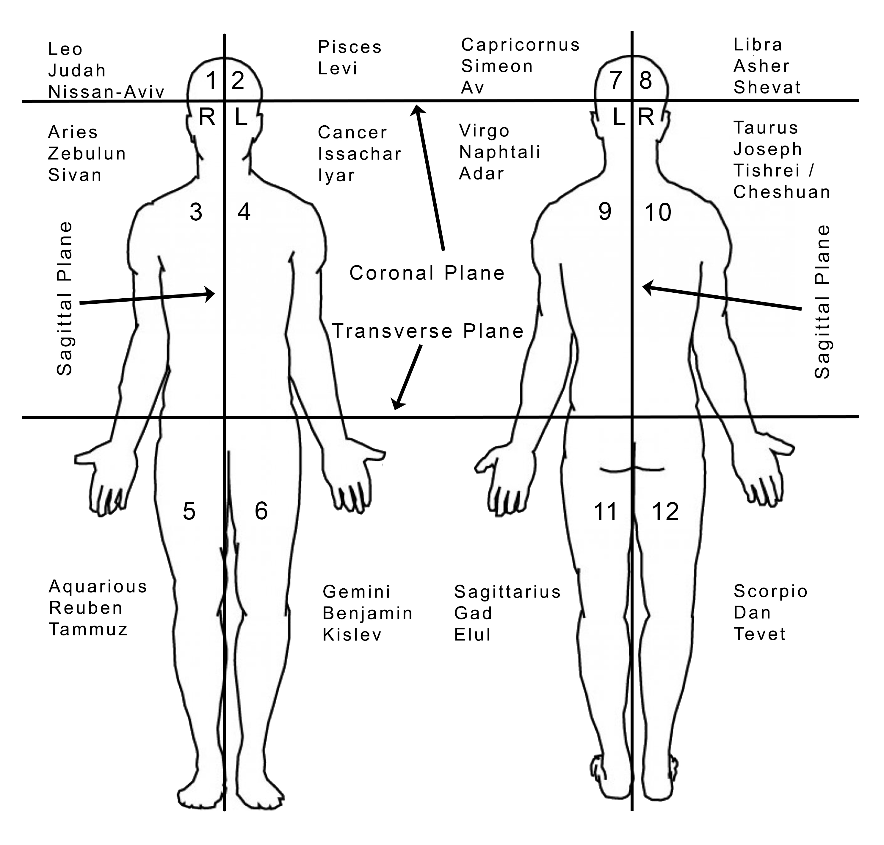 Domains of the Body - Picture
